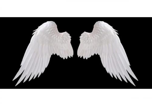 ailes d'ange.jpg