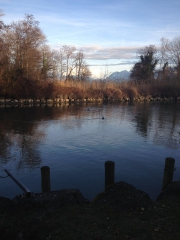 Lac Léman 8.jpg