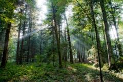 Bois du Jorat.jpg